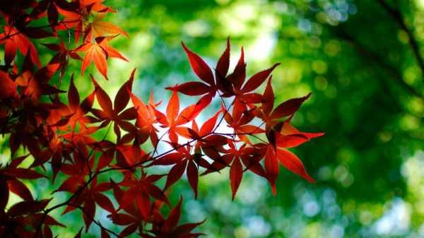 Лето кончается осень заносит листьями цвета осени лето