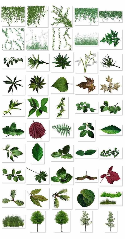 Картинки как называются листья